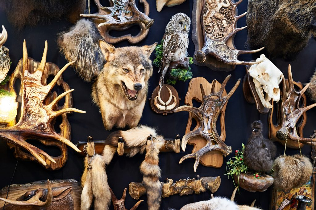 Why trophy hunting banned